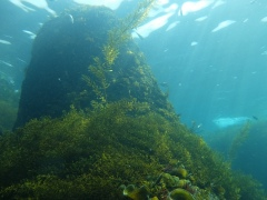 海藻と光線