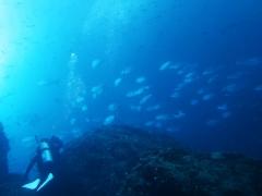 イソマグロ@ケータ遠征ダイビング