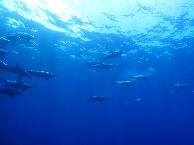 水中でイルカに遭遇@小笠原ツアー