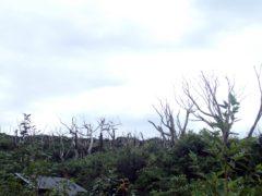 朽ちた木々