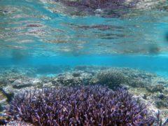 サンゴ礁@パラオダイビングツアー