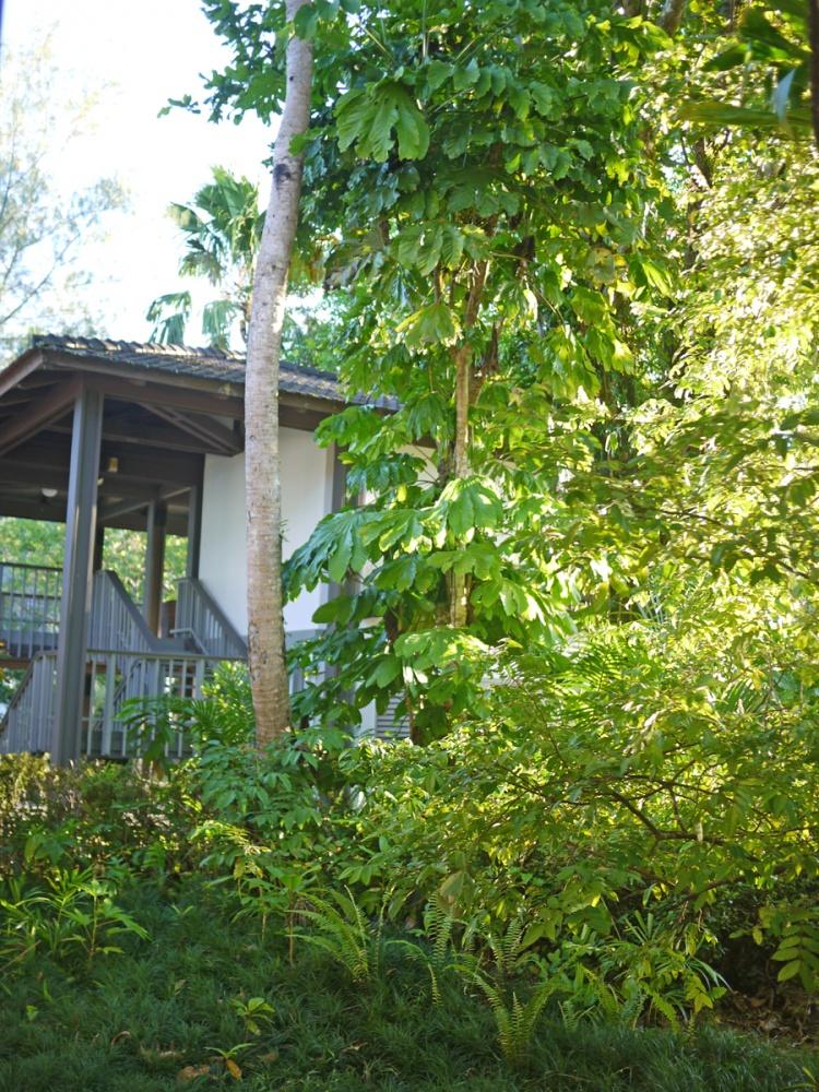 熱帯の木々に囲まれたリゾート