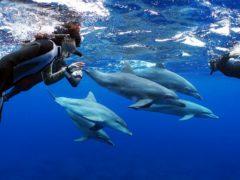 イルカの群れ@三宅島ドルフィンスイムツアー