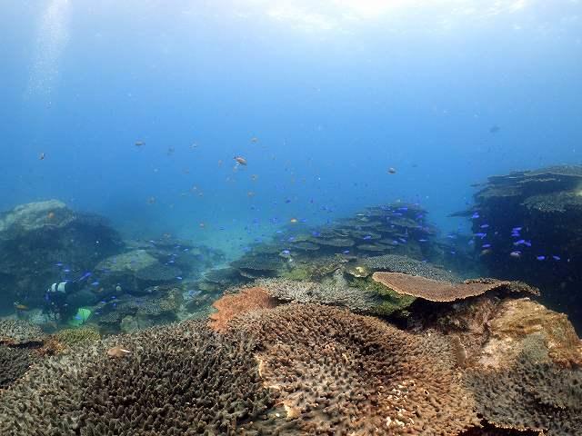 サンゴ礁#柏島ダイビングツアー