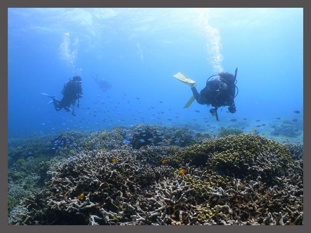 水温は25℃ サンゴの上をふわふわー