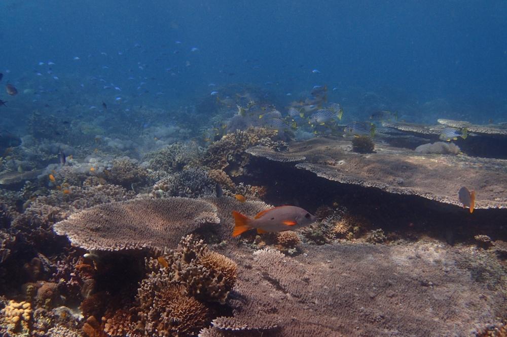 サンゴの上の魚