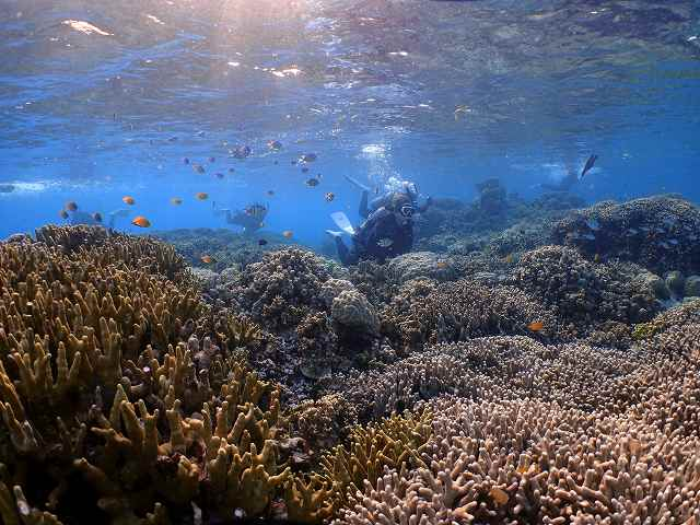 サンゴ#セントカーディナル#パラオ#ダイビングツアー