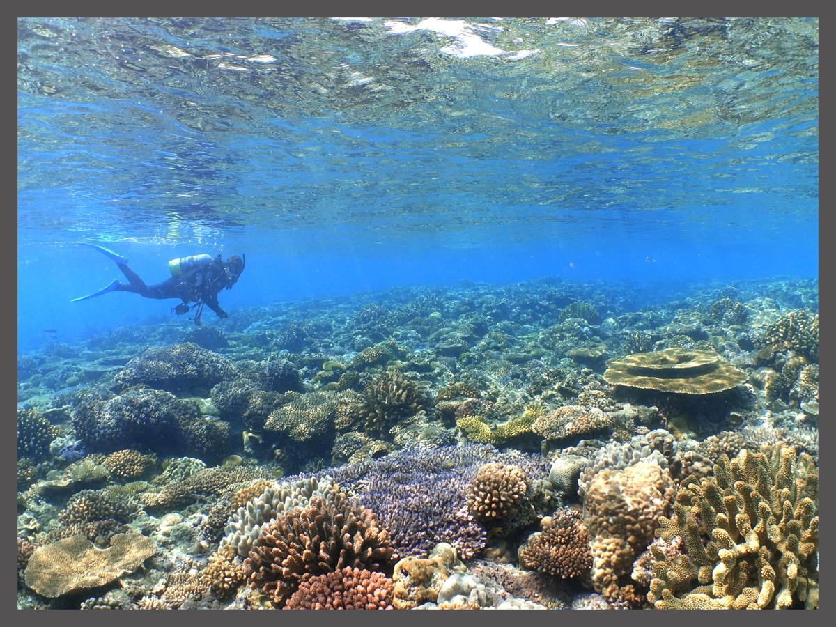 サンゴとサユミ