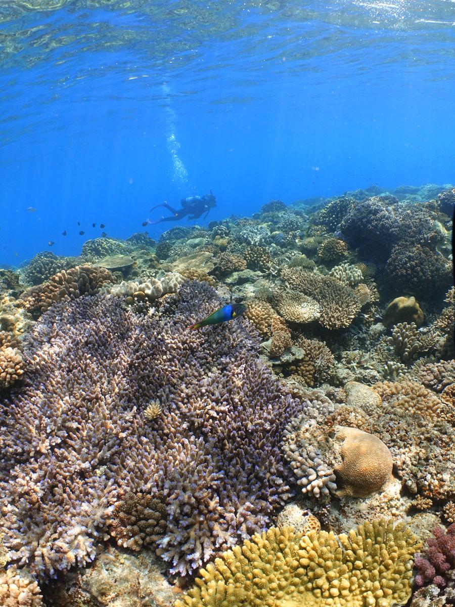 サンゴとちるちるみちる