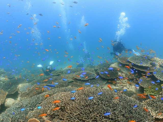 柏島ダイビングツアー#サンゴ礁