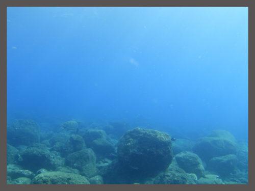 太陽の光を浴びるウミガメ