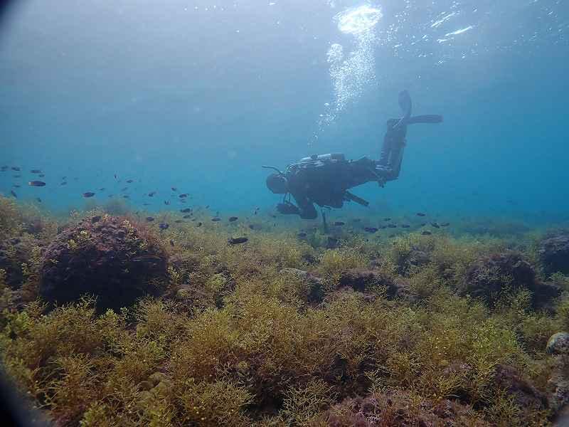 浅場の海藻が素敵