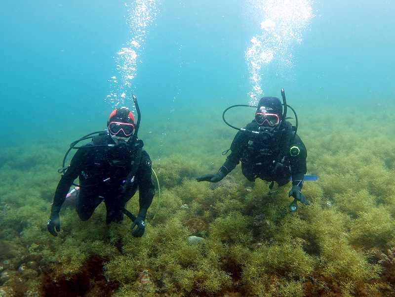 春の伊豆の海海藻