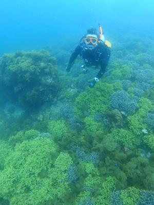 枝サンゴと海藻